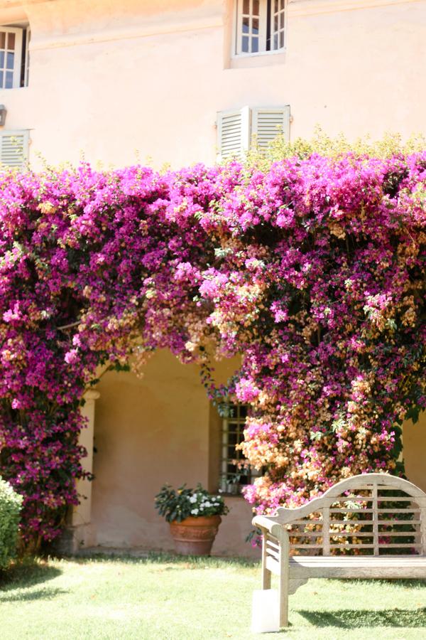domaine de vignale fleurs