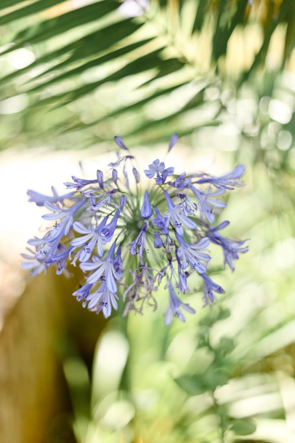 fleurs jardin de vignale